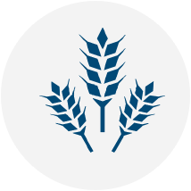 graphics__icon-wheat